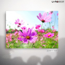 190813_PRINTED_PICTURE_COSMOS_VIVID_RESIZE_50X70