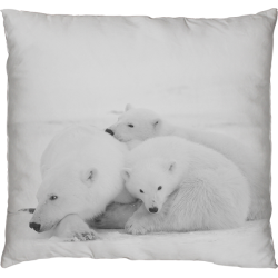 COLA FAMILY-B-CUSHION (1)
